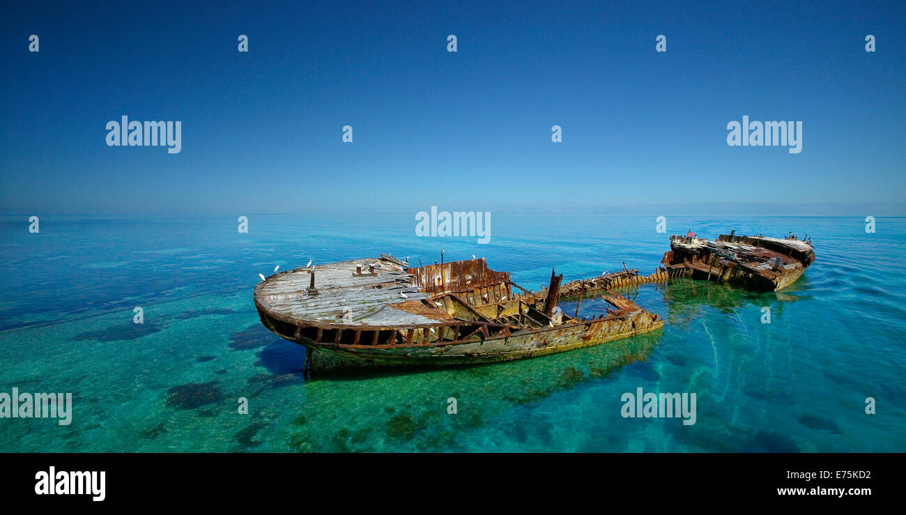 HMAS Protector shipwreck, Great Barrier Reef QLD Australia - Stock Image