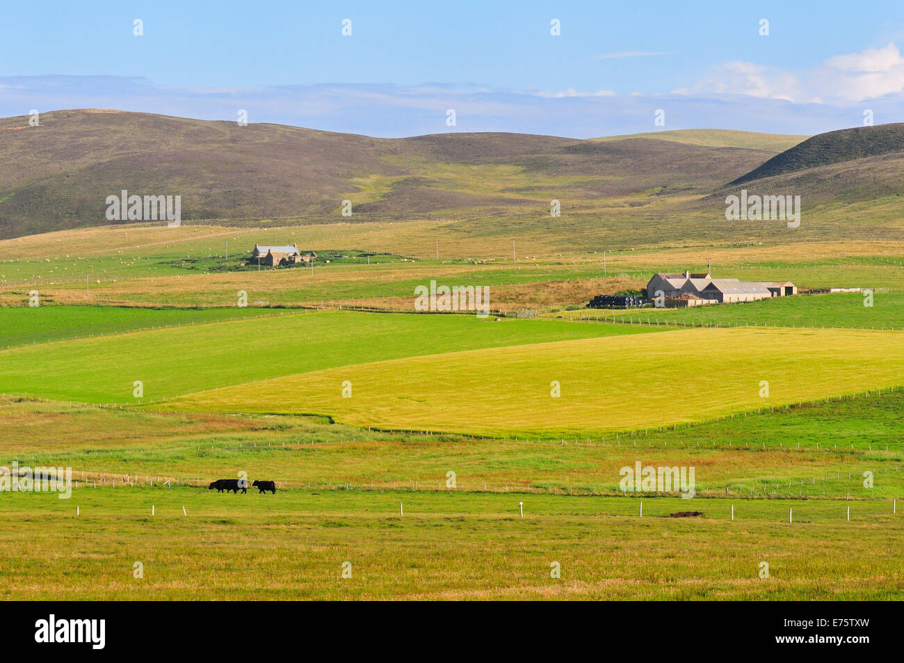 Landscape with a farm, Yesnaby, Mainland, Orkney, Scotland, United Kingdom - Stock Image
