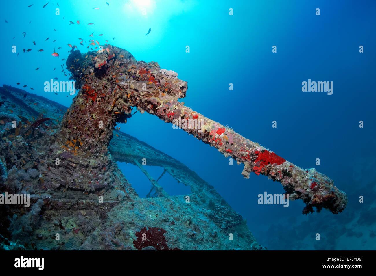 Heavy machine gun, shipwreck of the SS Thistlegorm, Red Sea, Shaab Ali, Sinai Peninsula, Egypt - Stock Image