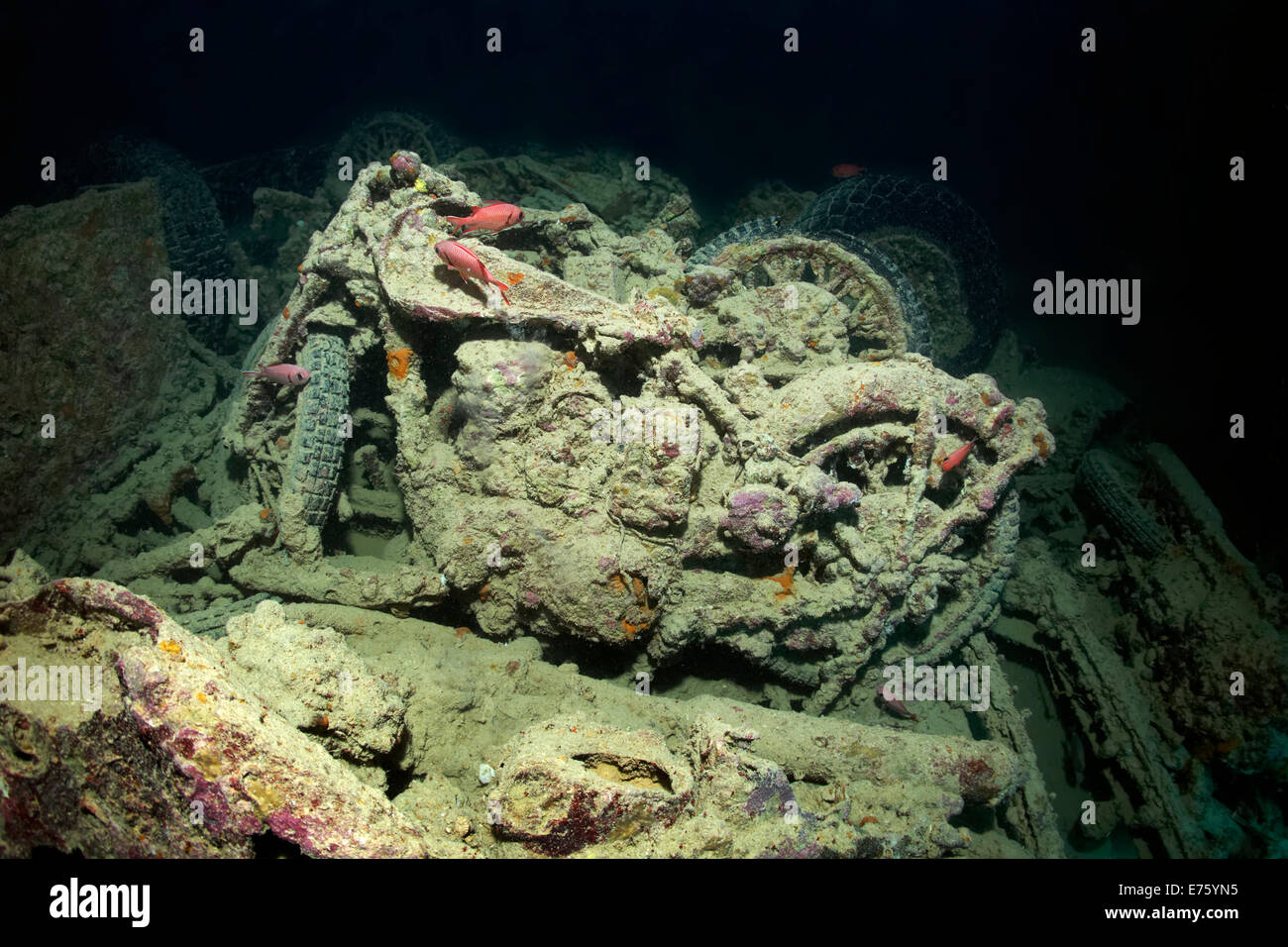 British Small Arms BSA M-20 motorcycle, cargo on the shipwreck of the SS Thistlegorm, Red Sea, Shaab Ali, Sinai - Stock Image