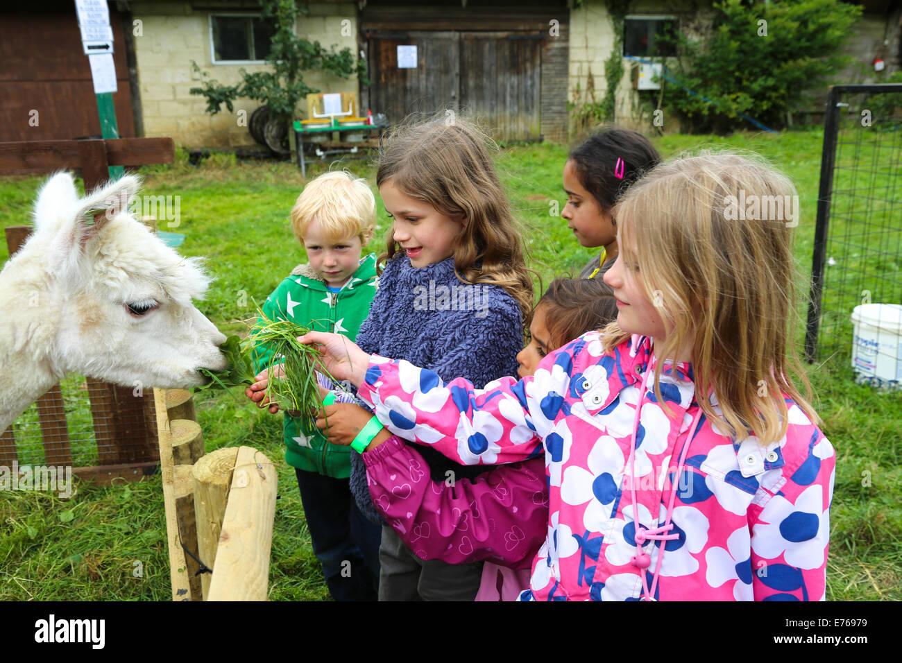 Children petting the Llamas, Amazing Animals, Heythrop Zoo Stock Photo