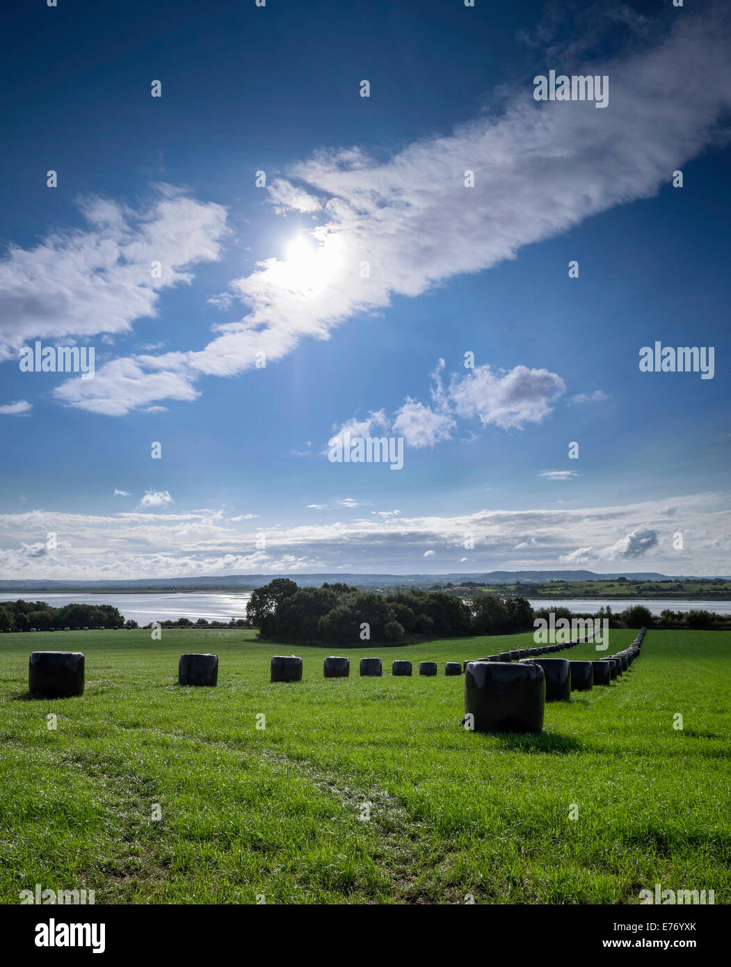 Field with wrapped bales in field on bank of River Severn, Gloucestershire England UK.Bales wrapped in black plastic - Stock Image