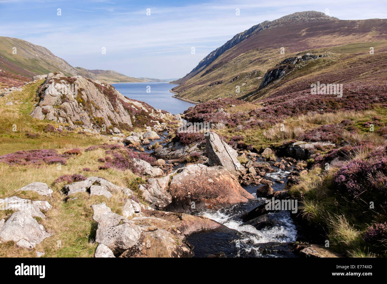 Looking north along a mountain stream supplying water to Llyn Cowlyd Reservoir lake below Creigiau Gleision in Snowdonia - Stock Image