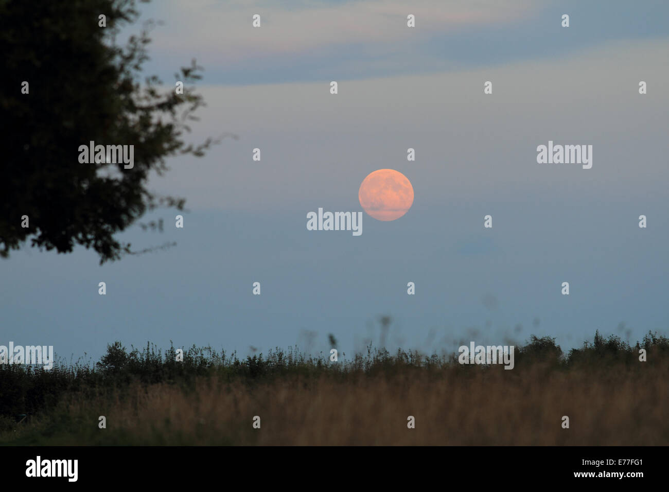 Norfolk, UK. 8th Sep. 2014. Full moon at Burgh Castle, Great Yarmouth, Norfolk, UK Credit:  charcrit boonsom/Alamy - Stock Image