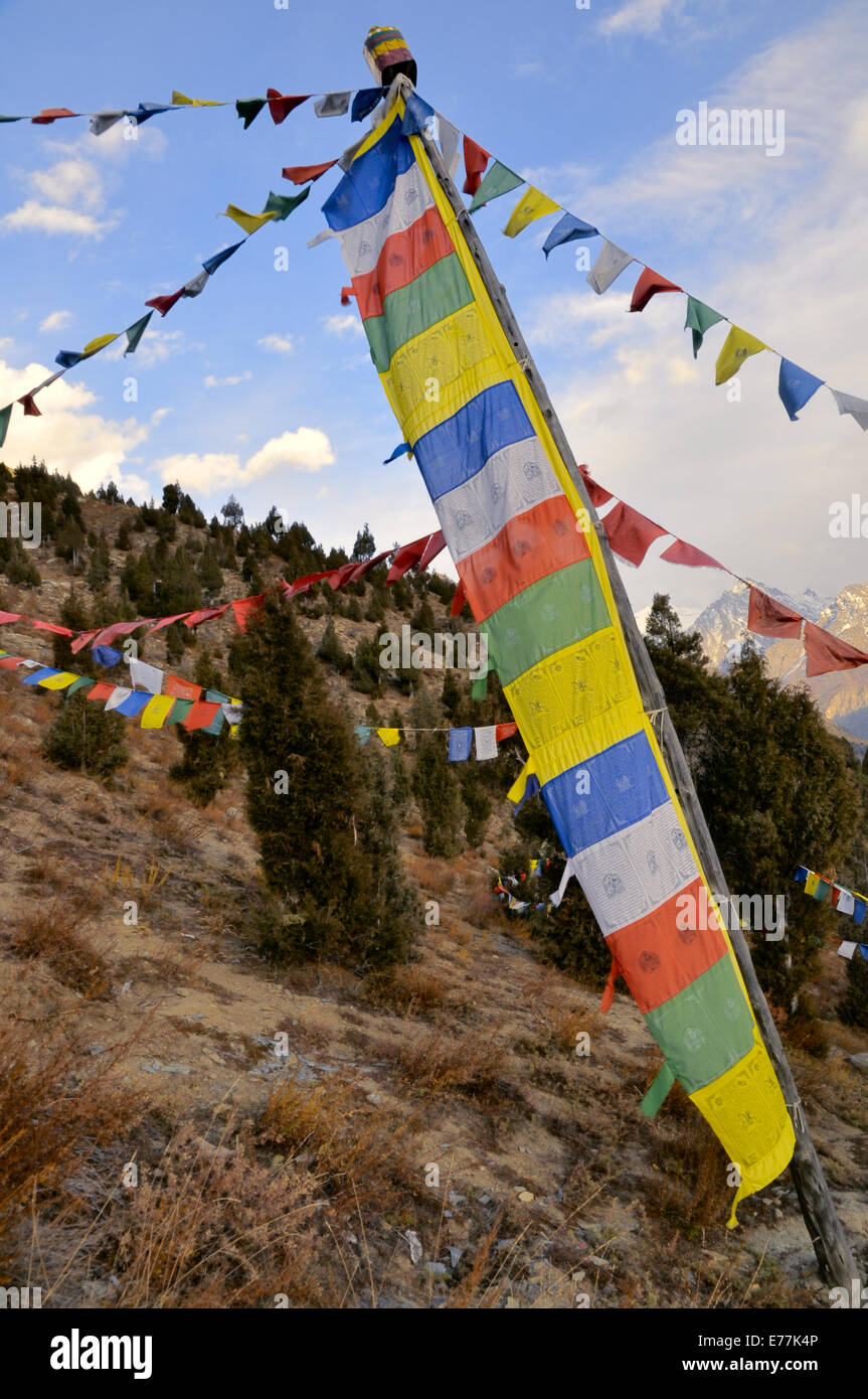 Picturesque view of colorful Buddhist flags hanging over trees in Himachal Pradesh, India - Stock Image