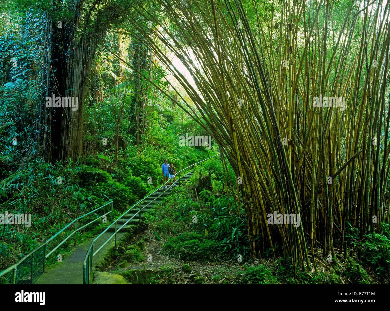 Couple on staircase walkway in bamboo forest below Akaka Falls on Big Island of Hawaii - Stock Image