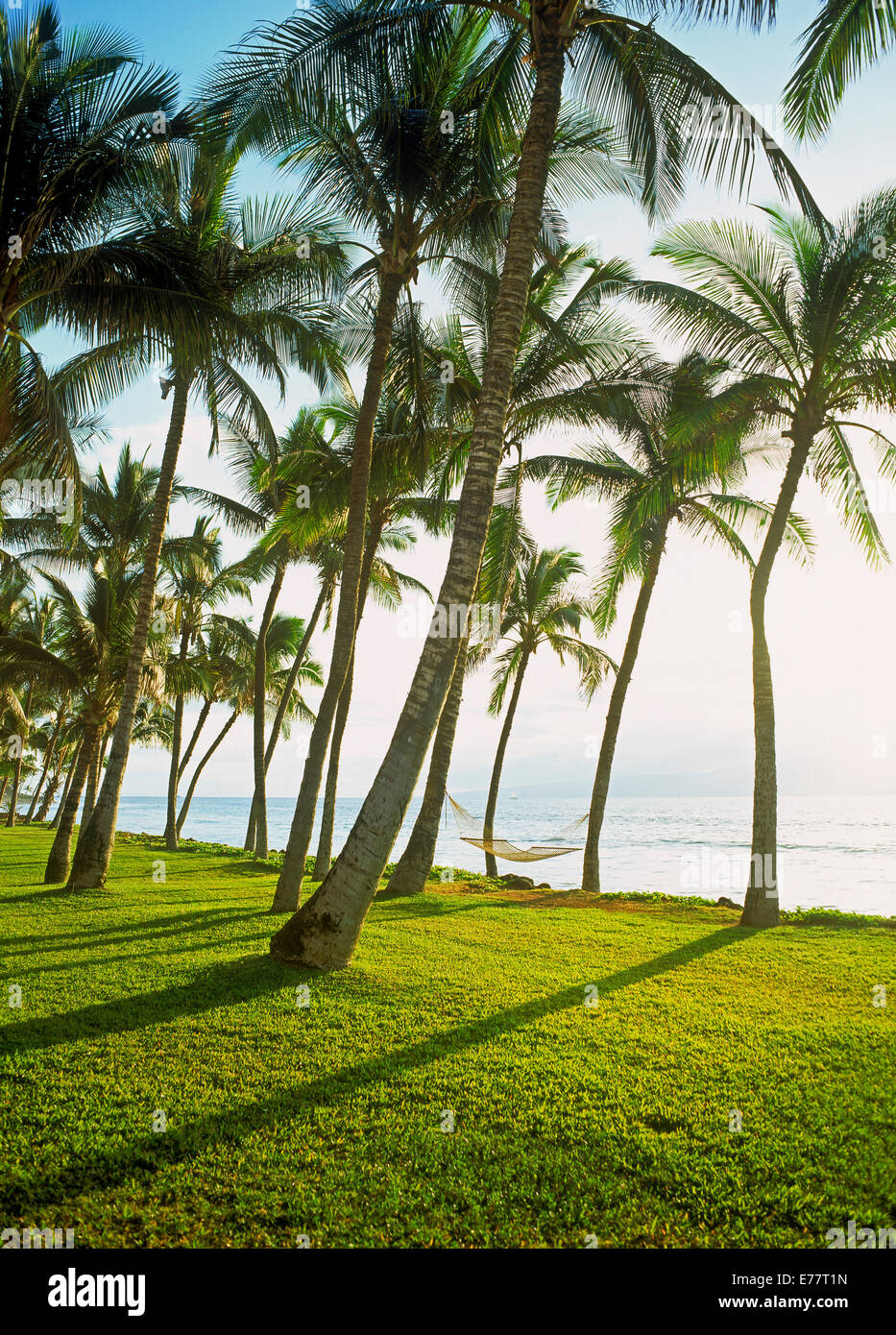 Hammocks hanging from palm trees over green grass on Maui along Pacific Ocean in bright sunlight - Stock Image