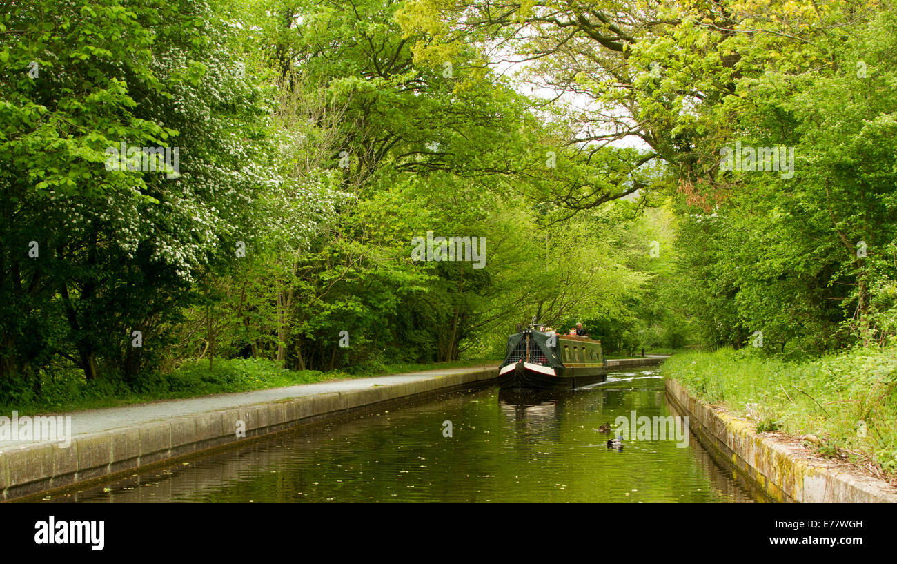 Traditional narrowboat on calm waters of Llangollen canal in Wales and passing through dense emerald woodlands Stock Photo