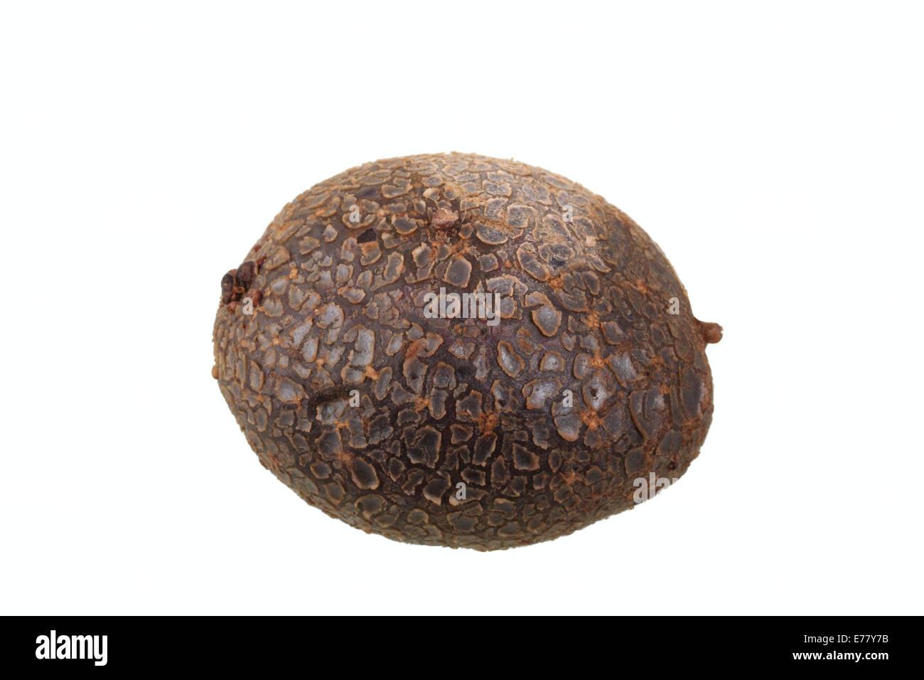 Potato, 'Blaue Anneliese' variety - Stock Image