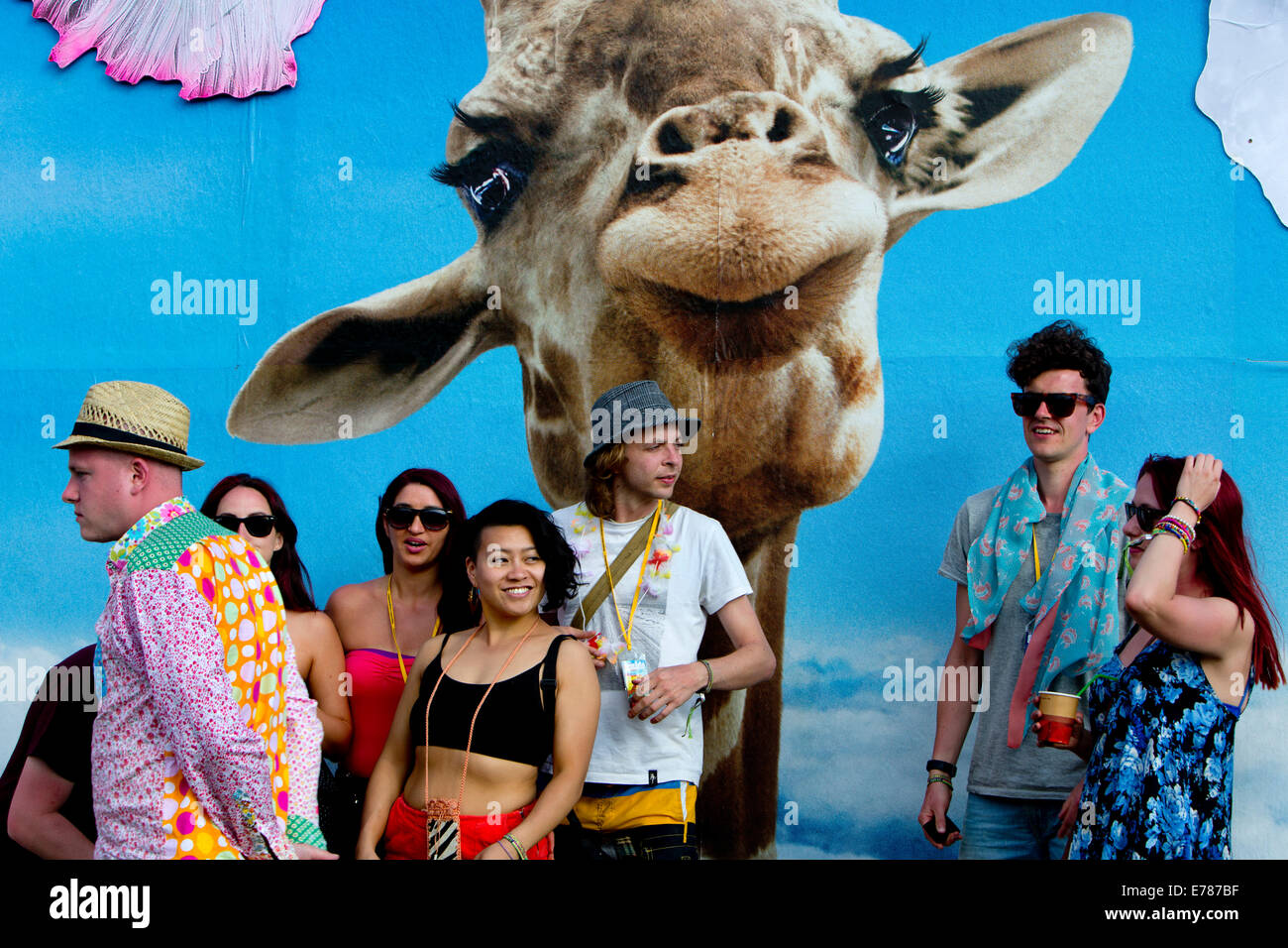 Glastonbury Festival 2014. group being photographed with a giraffe on the evolving graphic walls by Link Leisure - Stock Image