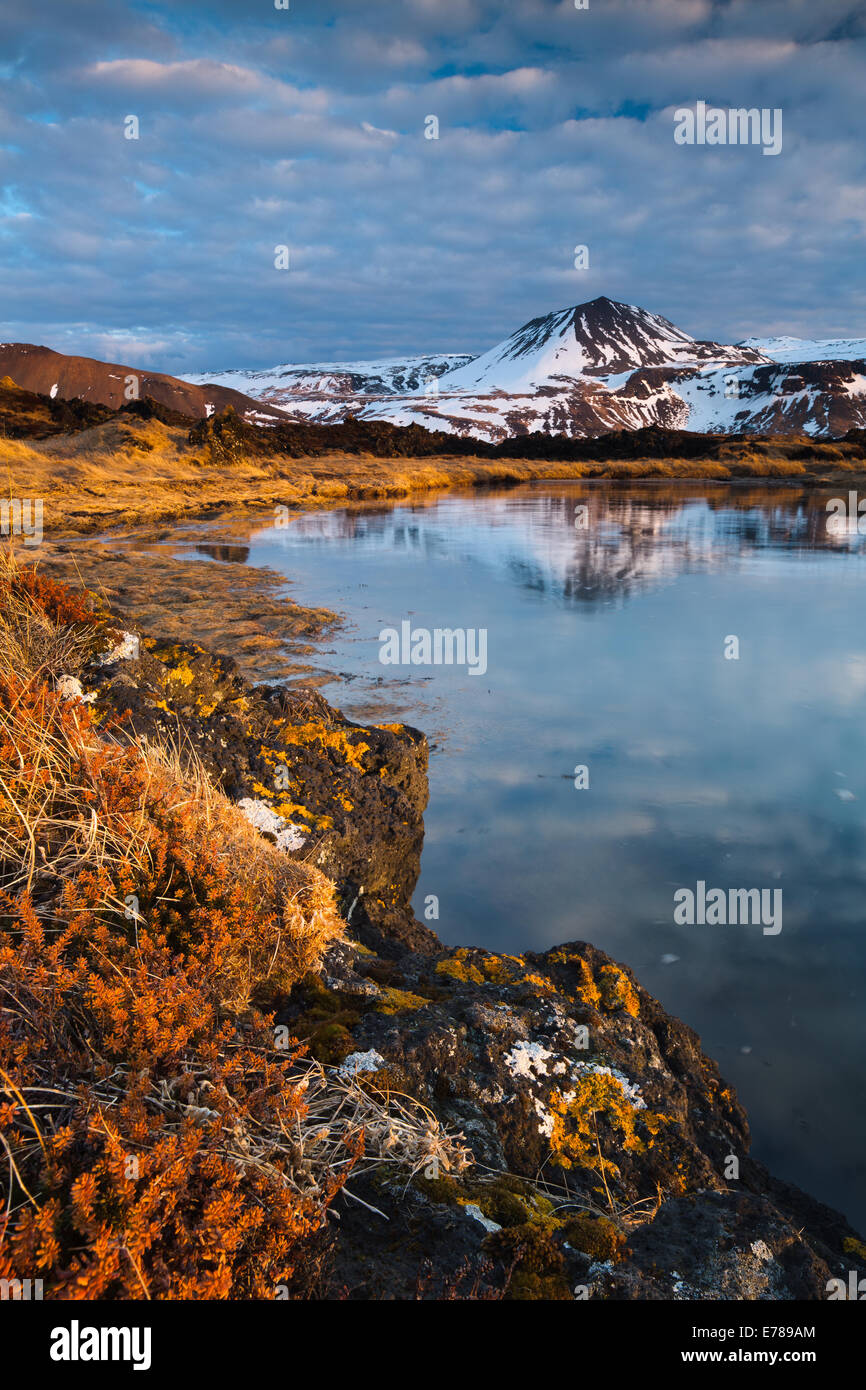 lichen on the rocks of the Budhraun lava fields, with Maelifell beyond, Budir, Snaefellsnes Peninsula, western Iceland - Stock Image