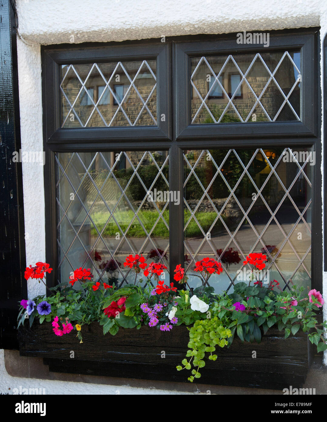Window box with brightly coloured display of red  geraniums and pink and purple petunias outside window of cottage - Stock Image