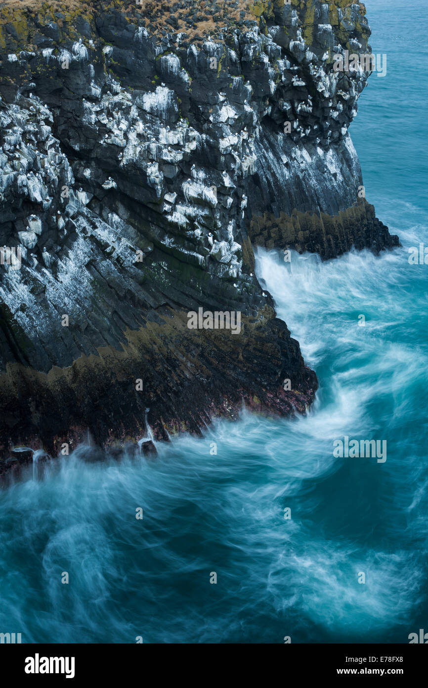 the cliffs streaked with the guano of fulmars and kittiwakes, nr Arnastapi, Snaefellsnes Peninsula, western Iceland - Stock Image