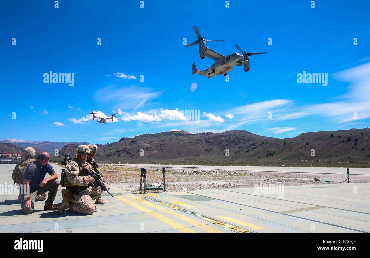 U.S. Marines with Foxtrot Company, 2nd Battalion, 7th Marine Regiment prepare to escort civilian personnel to board MV-22B Osprey tiltrotor aircraft Aug. 13, 2014, during a tactical noncombatant evacuation training mission as part of Large Scale Exercise Stock Photo