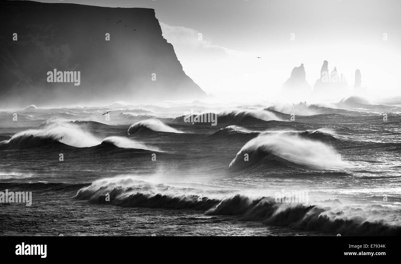waves breaking on Renisfjara beach while birds fly overhead, southern Iceland - Stock Image