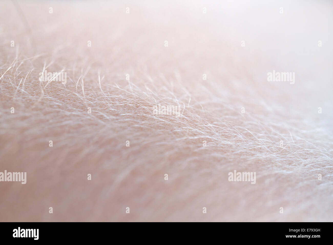 extreme close up skin - Stock Image