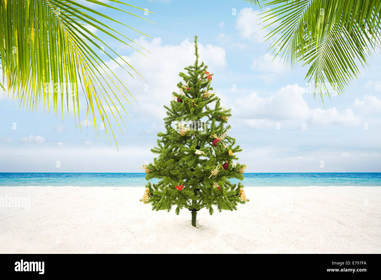Christmas Palm Tree Stock Photos & Christmas Palm Tree Stock Images ...