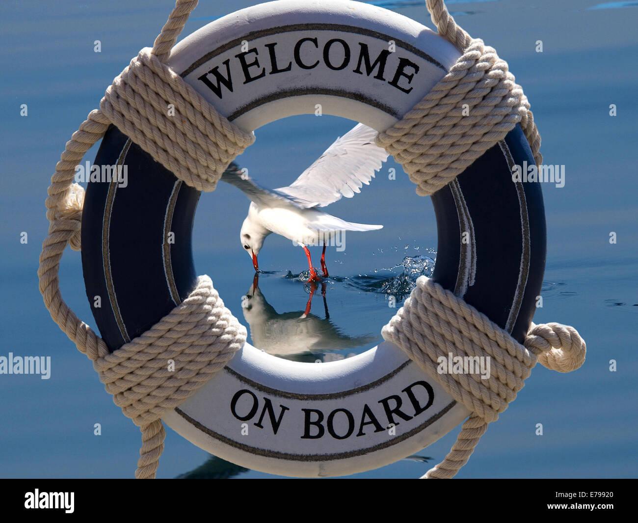 seagull  fishing  and splashing water surface and safe belt - Stock Image