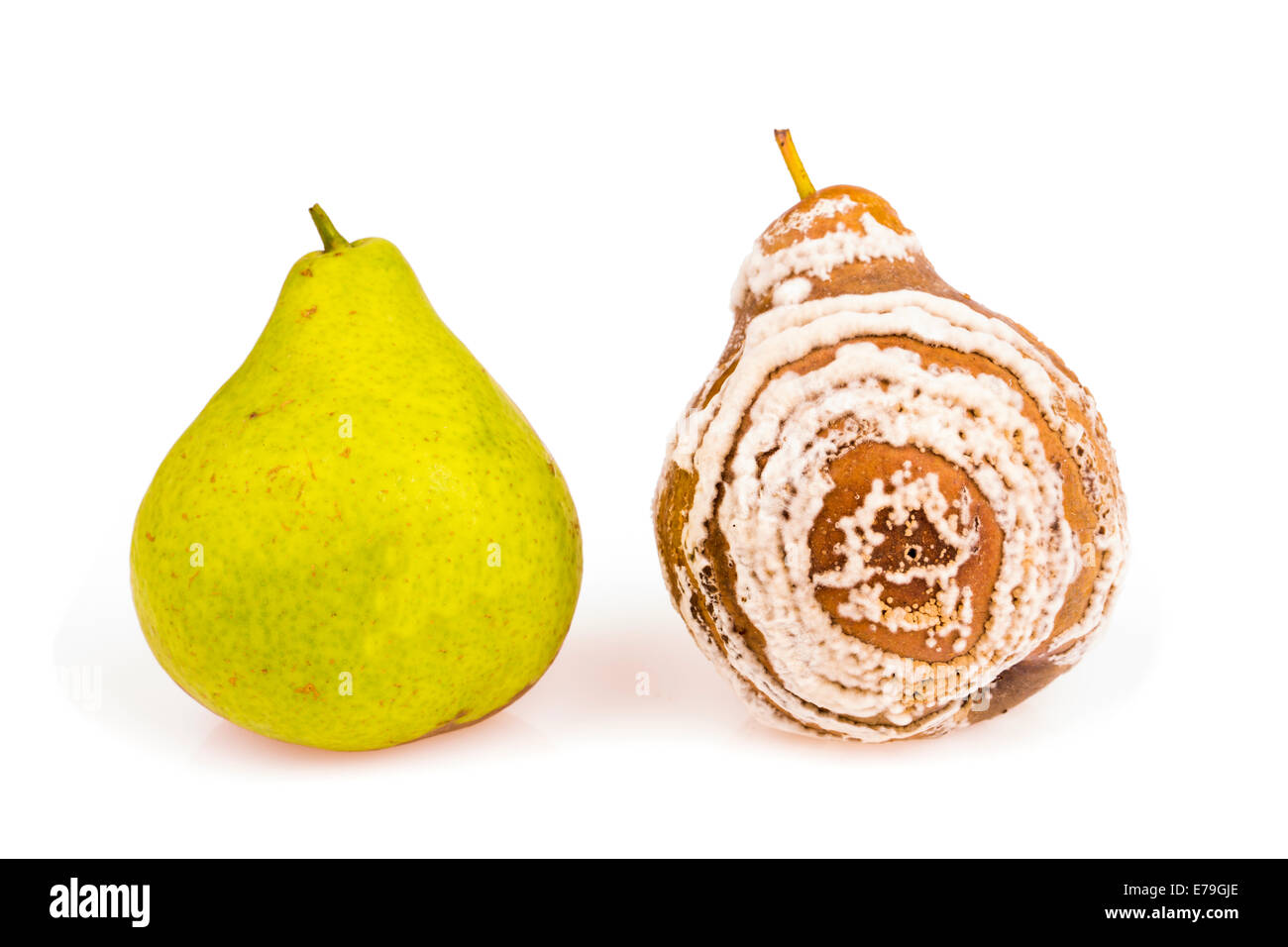 Fresh and rotten pears studio isolated - Stock Image
