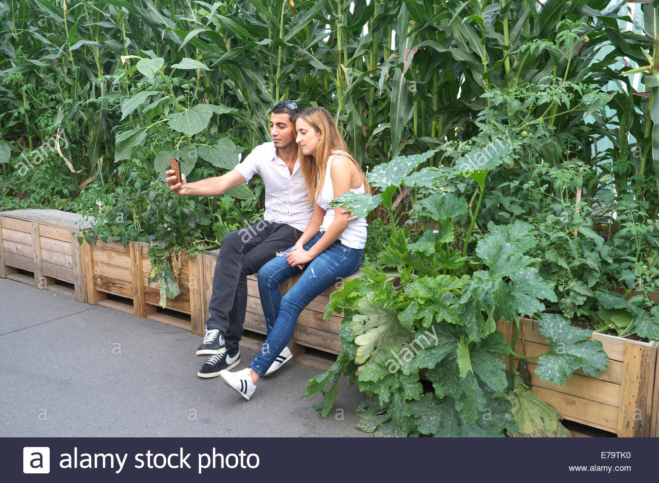 Two young Italian lovers take a selfie photograph using a smartphone, amongst an installation of corn plants at - Stock Image
