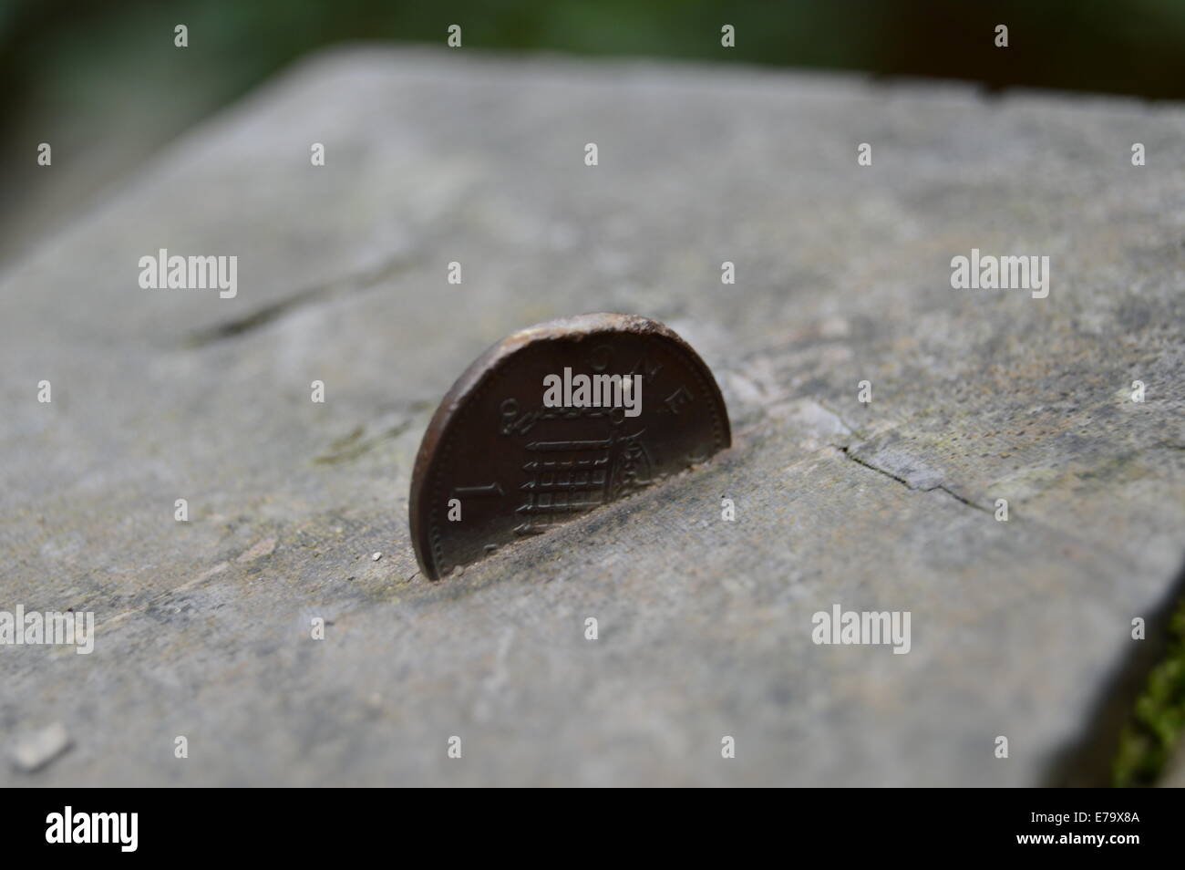 1 pence piece coin stuck in a piece of wood - Stock Image