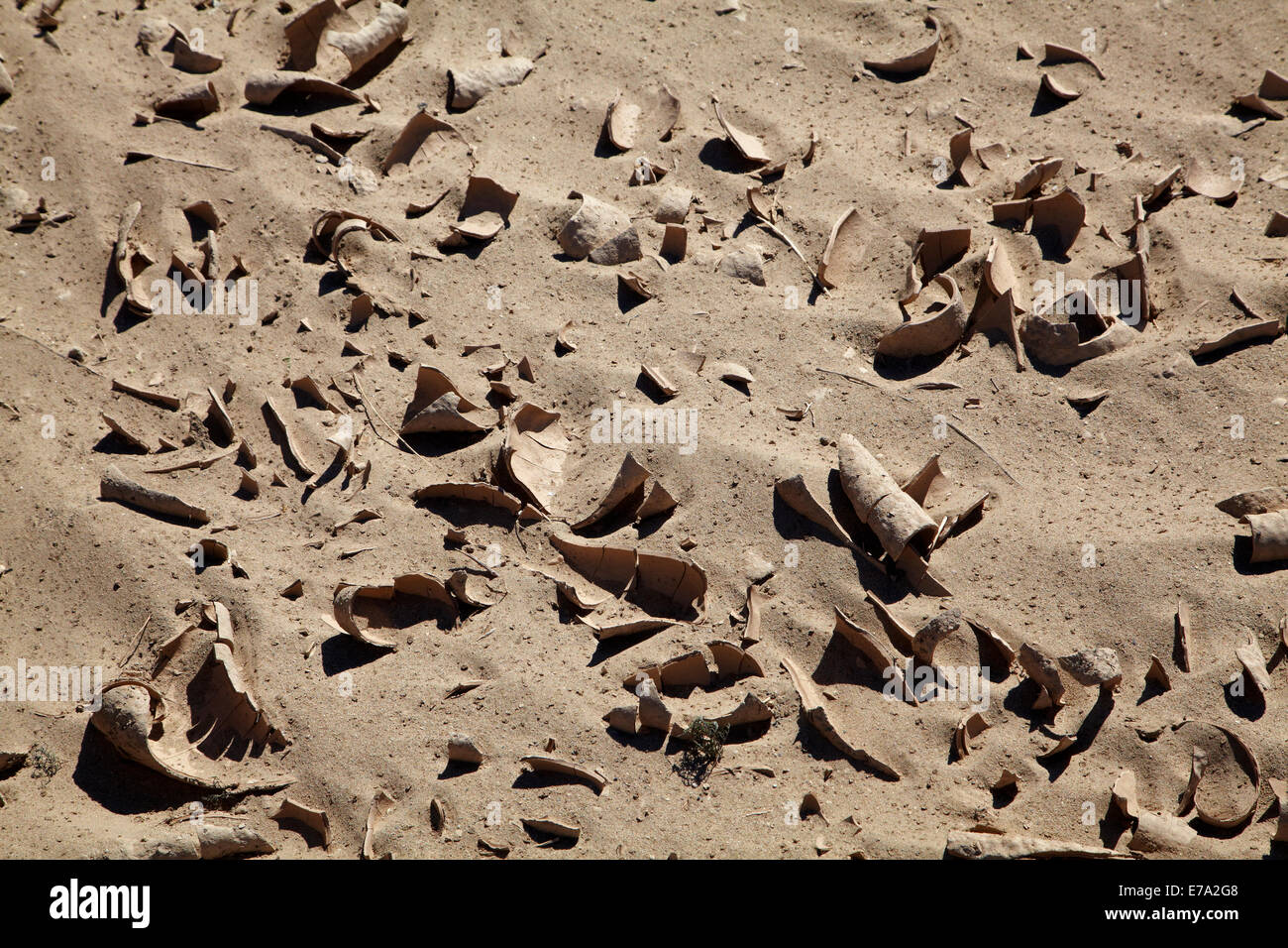Dried mud on salt Pan, Panamint Valley, Death Valley National Park, Mojave Desert, California, USA - Stock Image