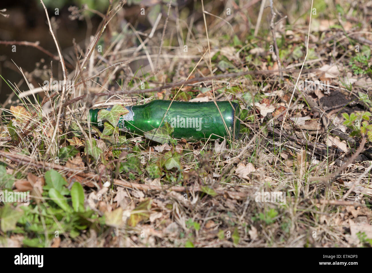 A discarded glass beer bottle littering the countryside.A possible fire risk in the dry grass if sun is magnified - Stock Image