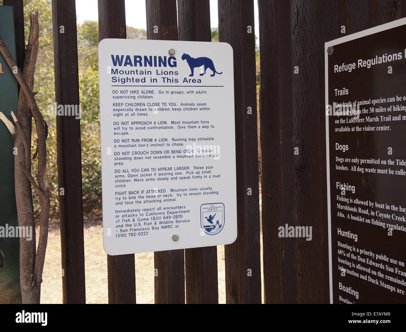 Mountain lion warning sign - Stock Image