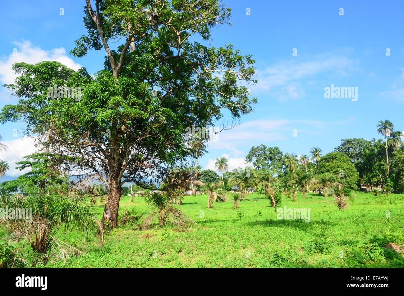 Green lush of the countryside, Sierra Leone, Africa - Stock Image