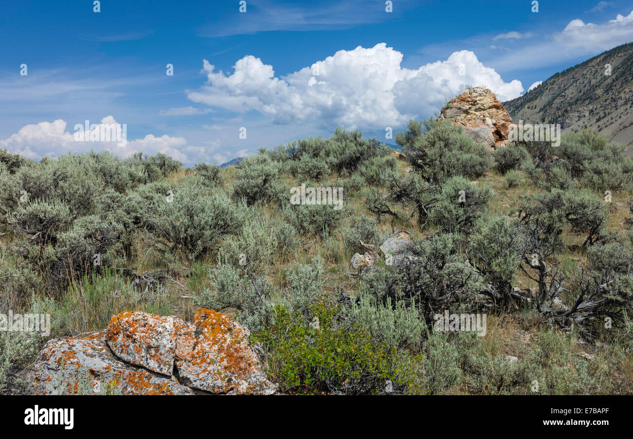 Rugged landscape of scrub land, rocks and high ground in Yellowstone National Park, Montana, USA. - Stock Image