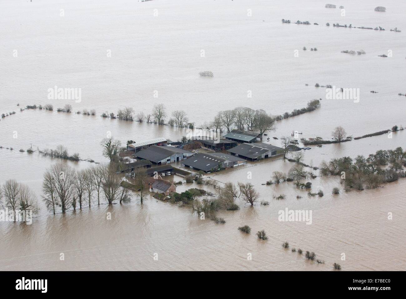 A farm surrounded by flood water near Moorland. Where all but a handful of residents have been evacuated. - Stock Image