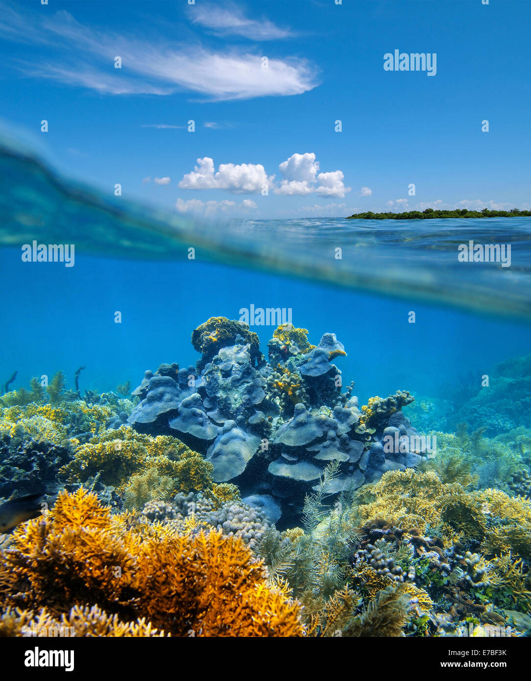 Over Under Split View In The Caribbean Sea With An Healthy Coral