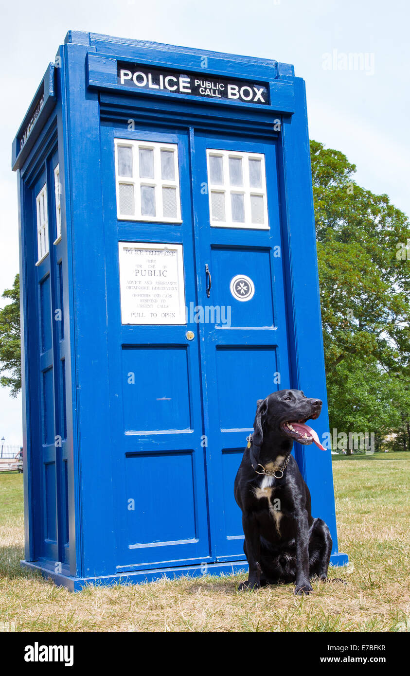 Black Labrador K9 dog sitting outside Dr Who's Tardis which has just materialised at Clifton Bristol UK - Stock Image