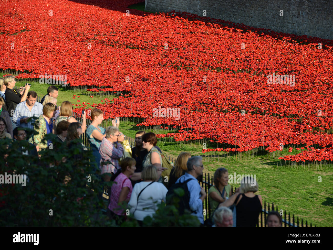'Blood Swept Lands and Seas of Red' by artist Paul Cummins, at the Tower of London in England UK - Stock Image