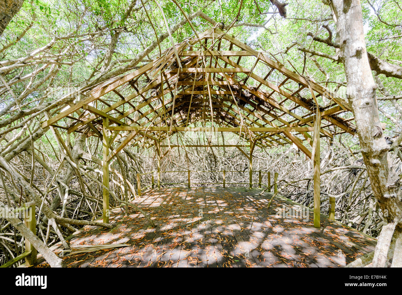 A bandstand in the mangrove forest of Petit Trou Lagoon near the Tobago Plantations Resort. Stock Photo