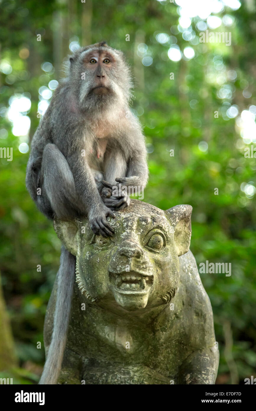 A long tailed macaque on top of a statue inside Ubud monkey forest, Bali - Stock Image