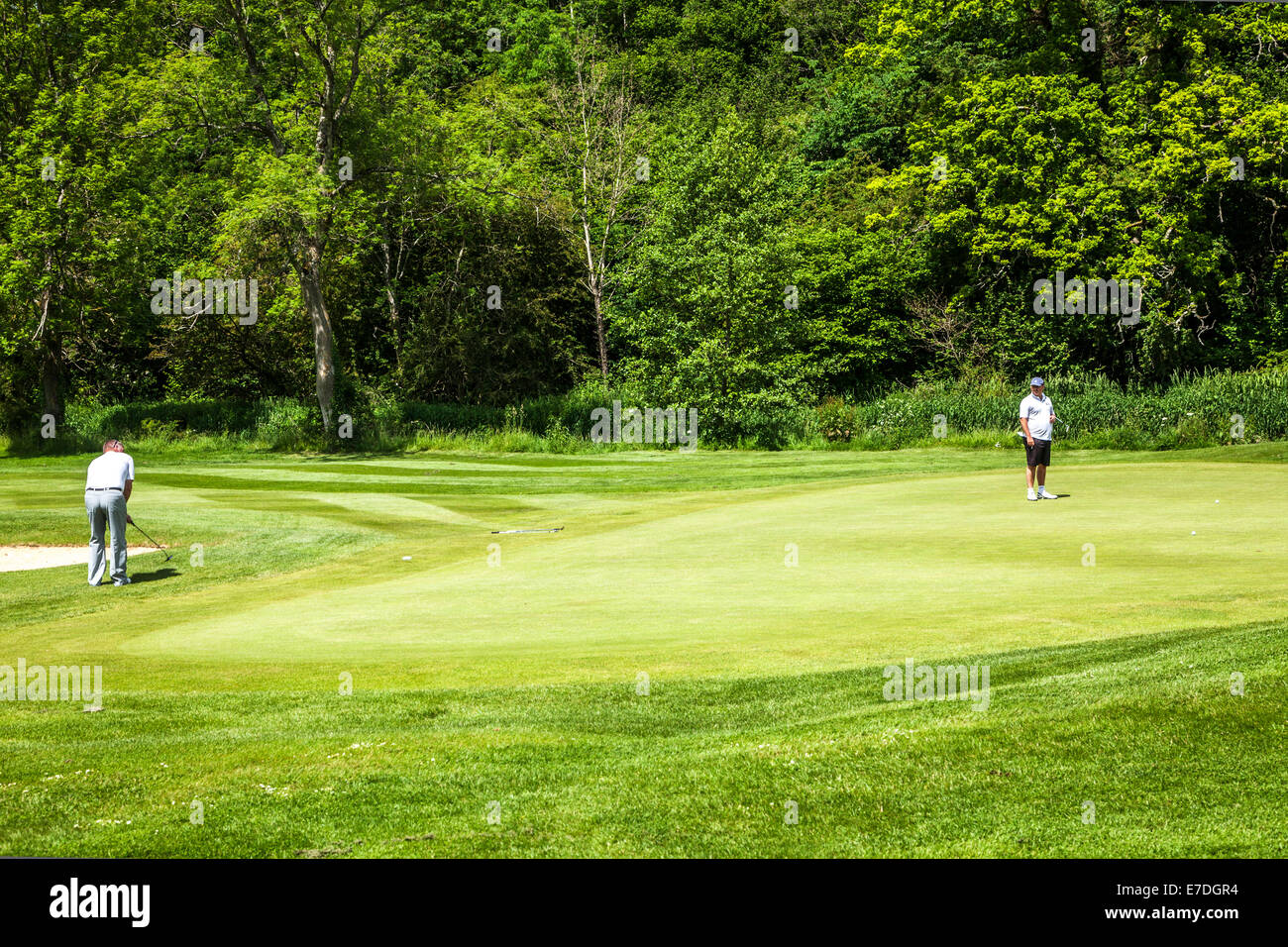Two golfers playing on a putting green near a hole on a typical English golf course. - Stock Image