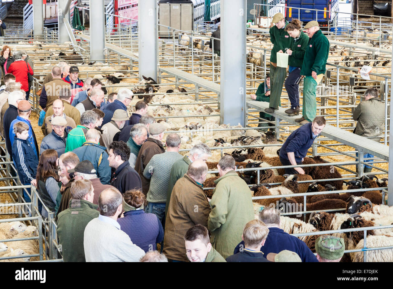 Farmers and auctioneer at the sheep auction at Melton Mowbray Market, Leicestershire, England, UK - Stock Image