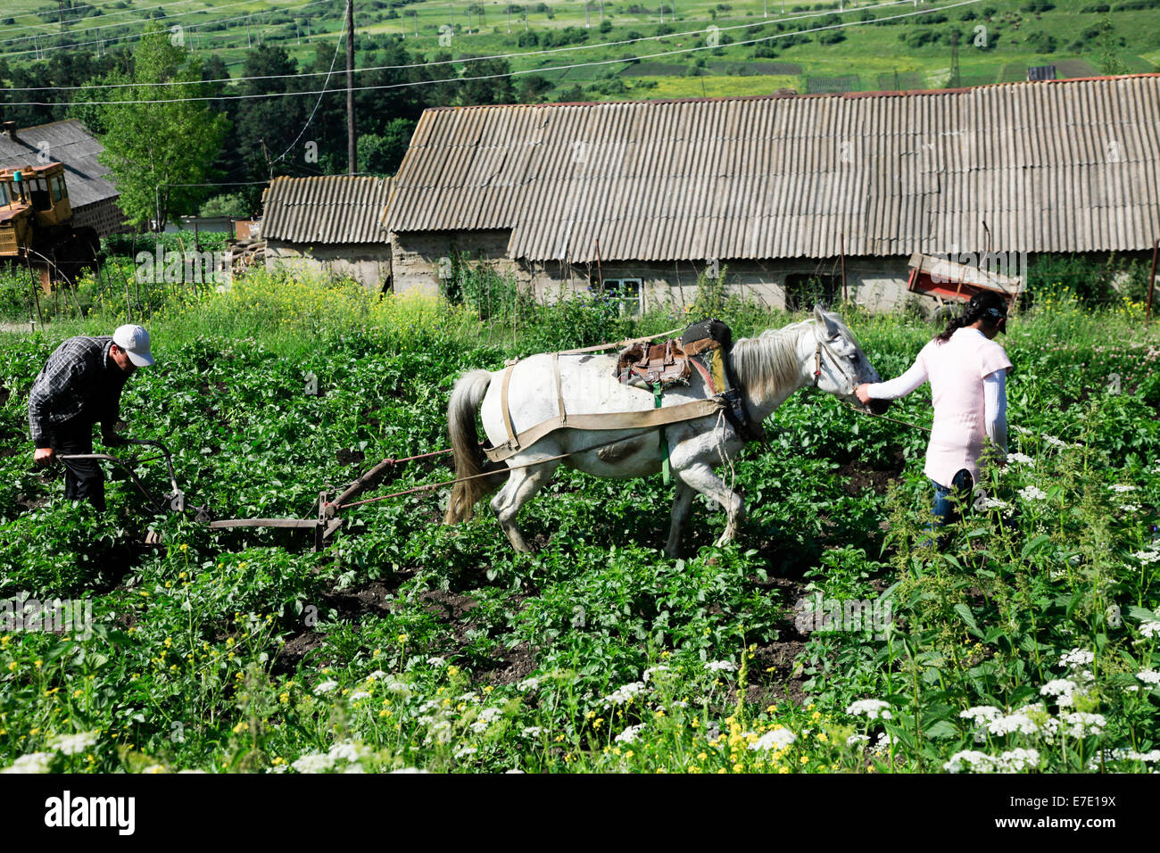 Farmers plough their field with a horse drawn hand plough. Photographed in Armenia - Stock Image