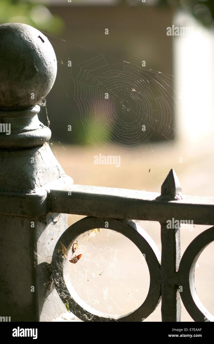 cobweb at metal railing, kirchberg, feldberg, feldberger seenlandschaft, mecklenburg-vorpommern, germany - Stock Image
