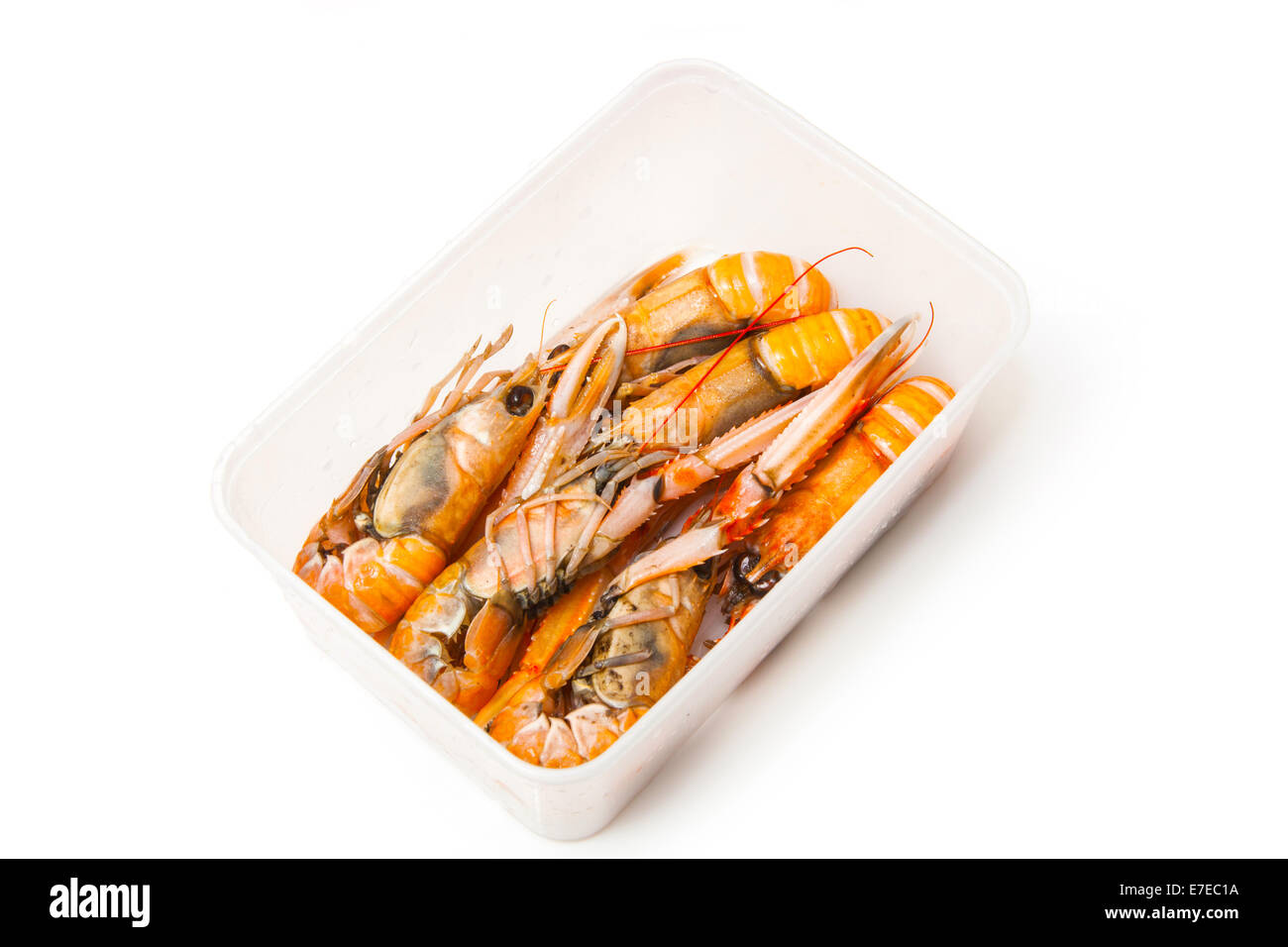 Langoustine  (Nephrops norvegicus),Dublin Bay Prawn or Norway Lobster isolated on a white studio background. - Stock Image