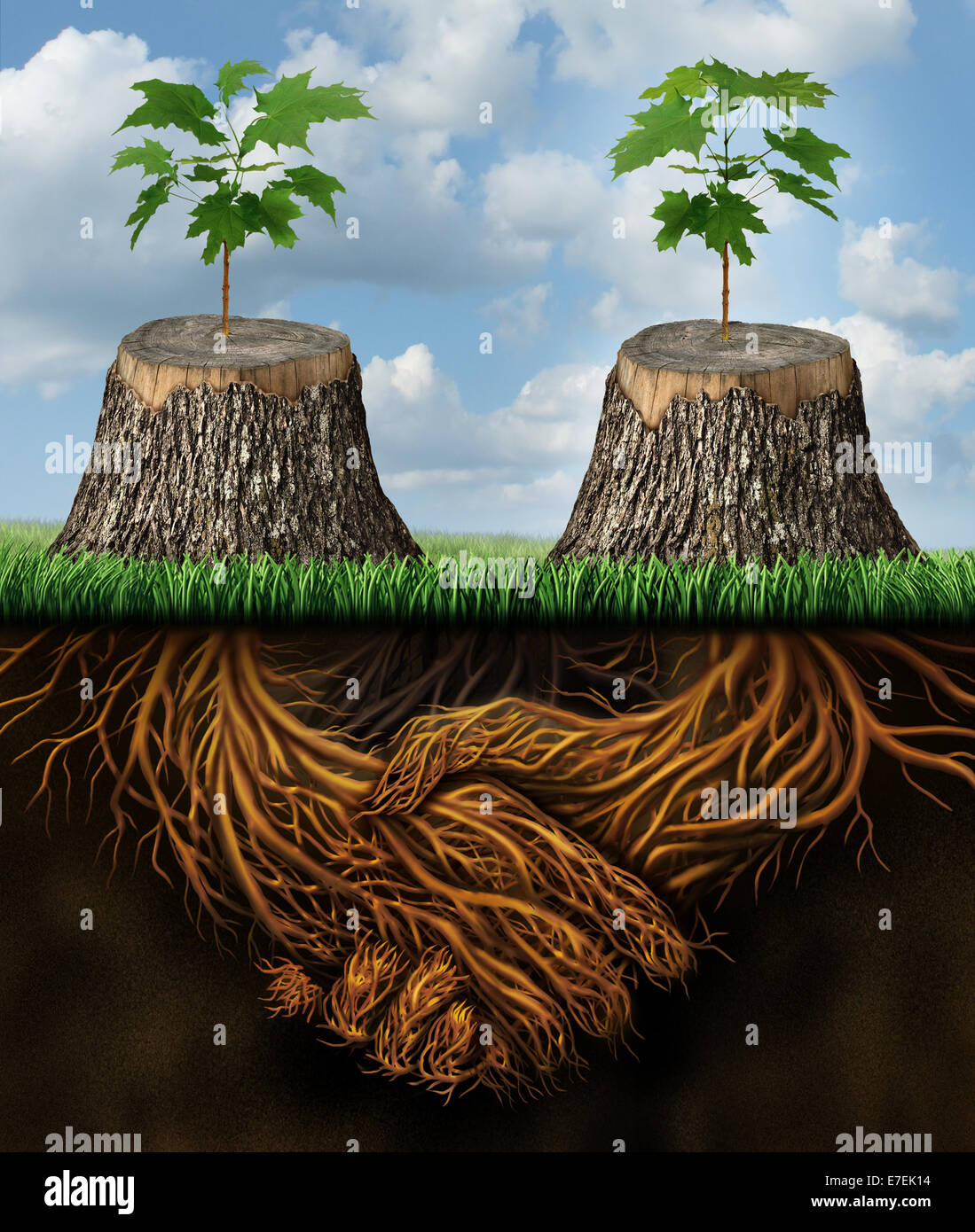 Helping one another as a mutual benefit business support group concept as two chopped trees with new growth of hope - Stock Image