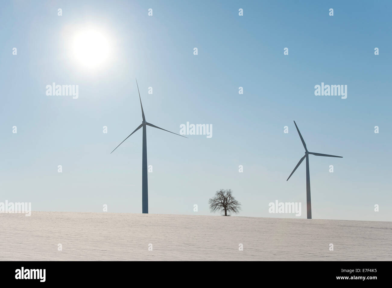 Wind turbines and single lime tree (Tilia spp.) with sun in winter, Thuringia, Germany - Stock Image