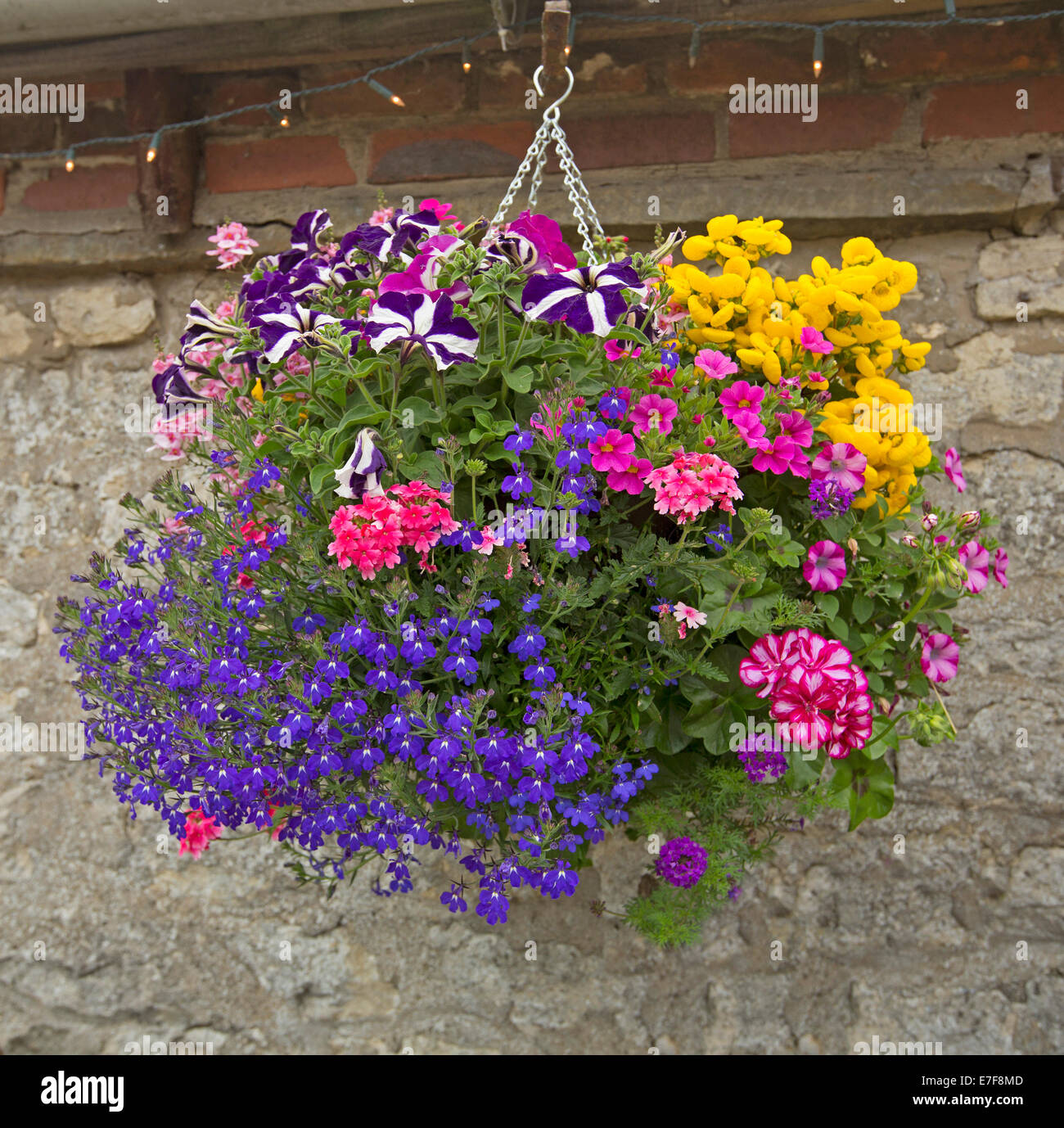 Hanging Basket With Mass Of Brightly Coloured Flowers Blue Lobelia