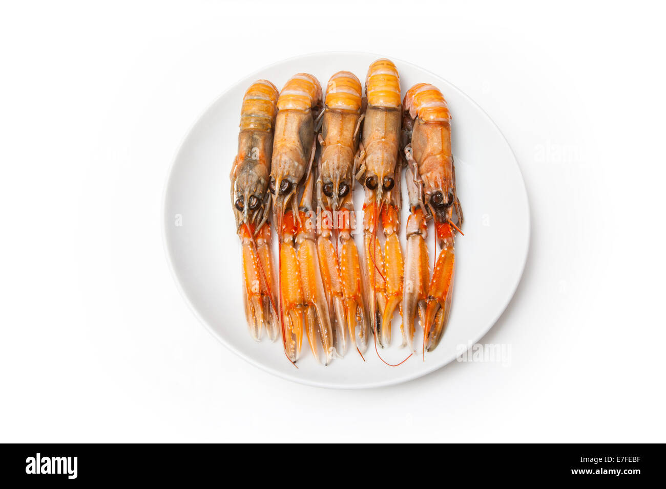 Langoustine  (Nephrops norvegicus),Dublin Bay Prawn or Norway Lobster ioslated on a white studio background. - Stock Image