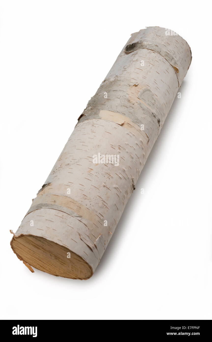 Birch tree log - Stock Image