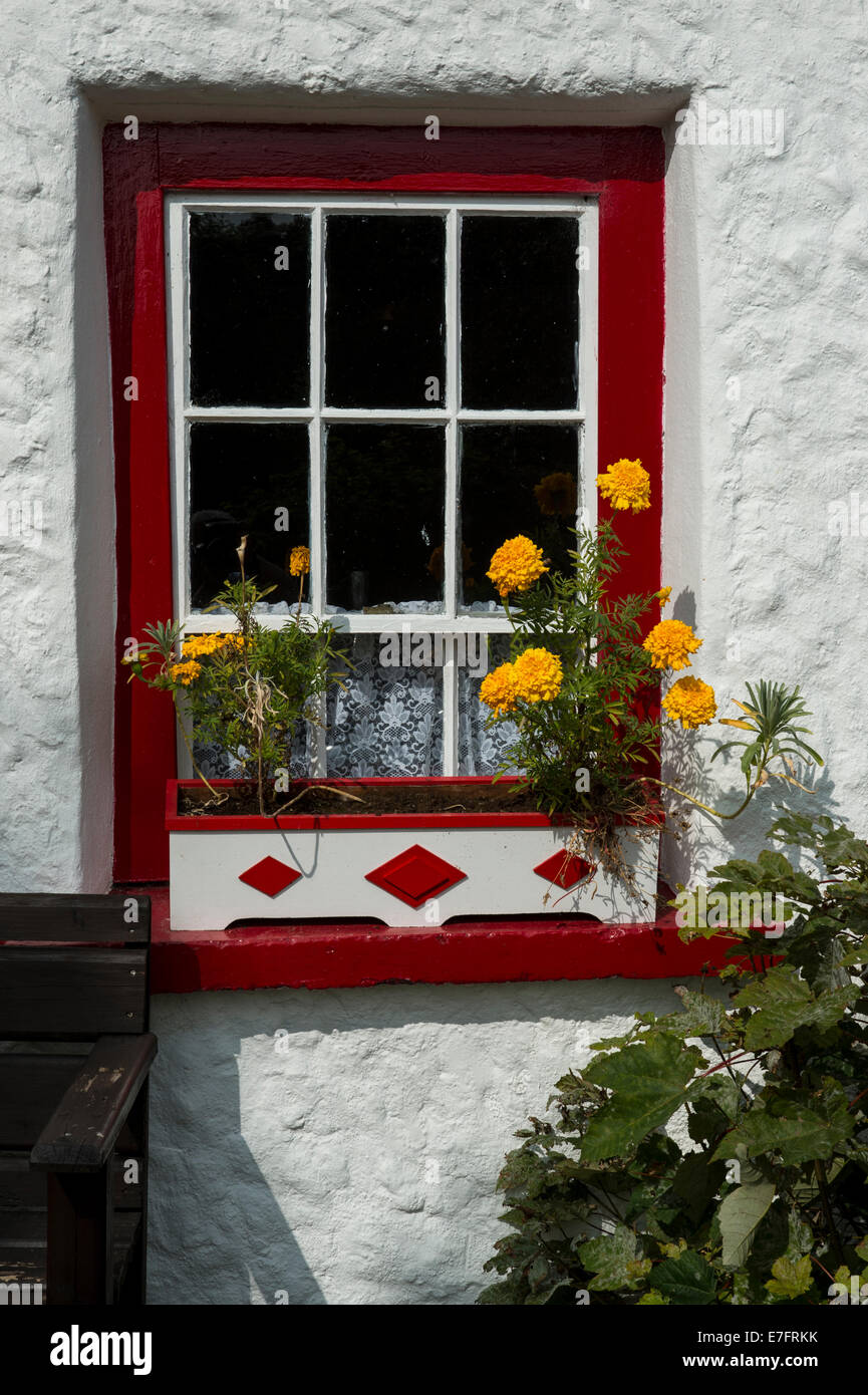 Colourful window and window box of Smiths Traditional Cottage, Kilmacrennan, County Donegal, Ireland, Europe - Stock Image