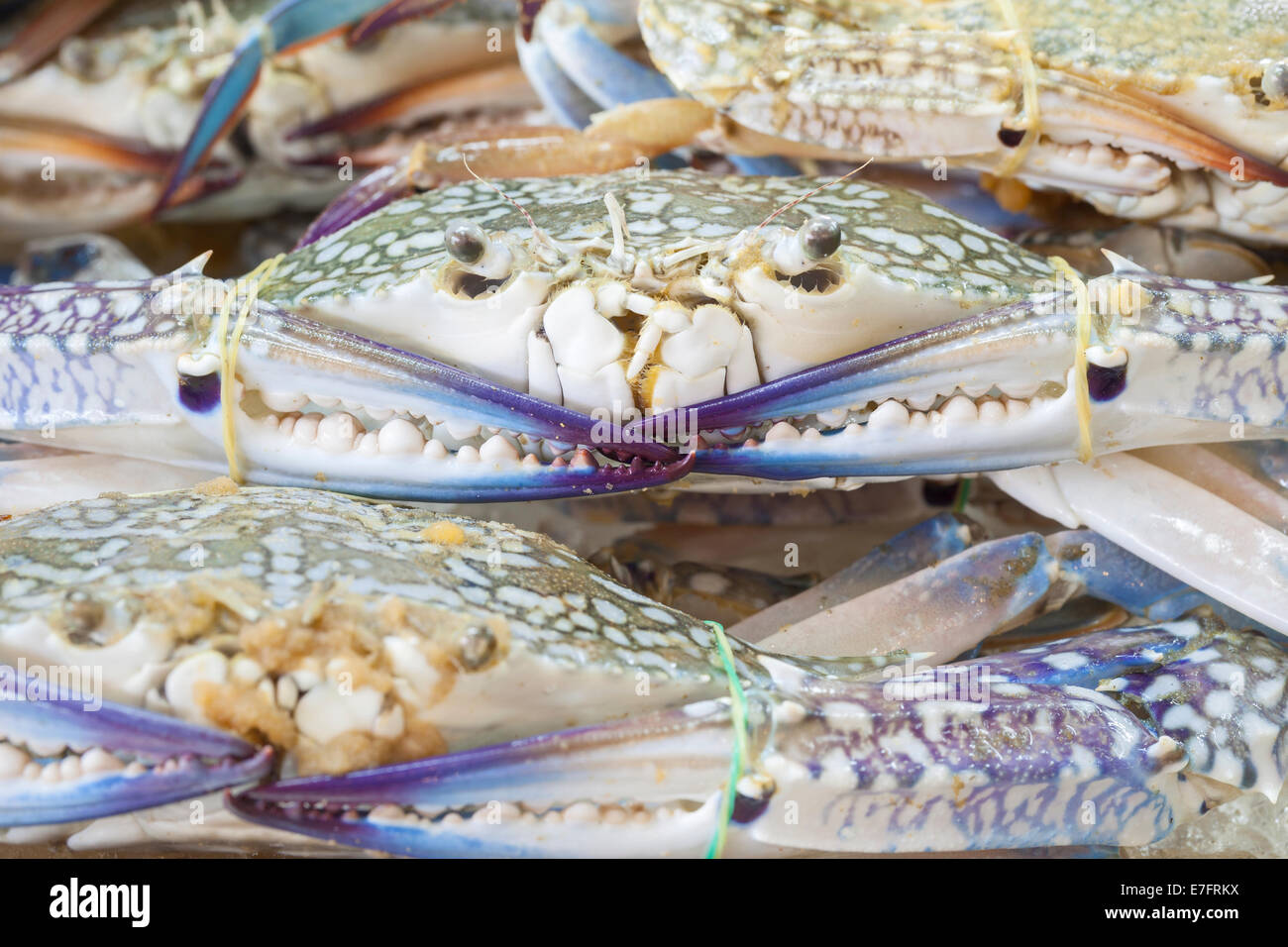 Crabs on display at a market in Thailand - Stock Image