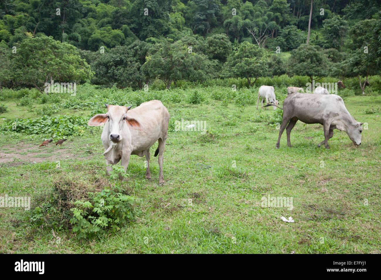 jungle, forest, plant, ecosystem, Tahiland, Asian, heat, humidity - Stock Image
