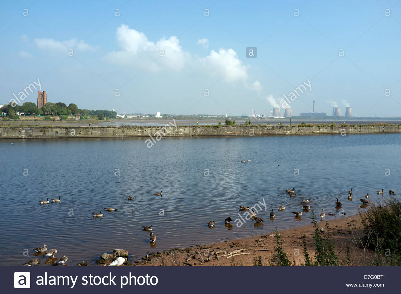 Wildlife bathe in the Manchester Ship Canal, with the River Mersey behind, and Fiddlers Ferrly power station in - Stock Image
